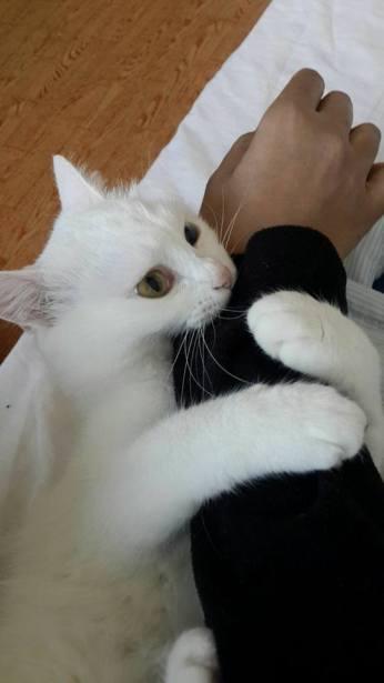 Mimi 6