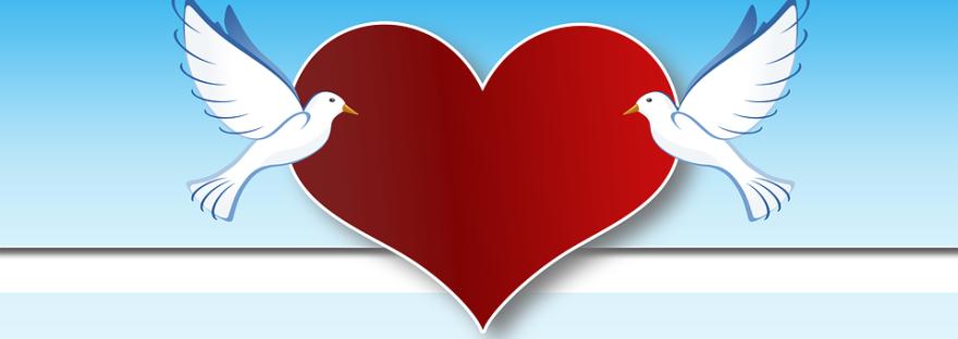 Weisse Tauben Zur Hochzeit Bringen Ungluck Gutes Karma To Go