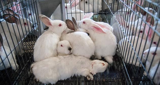kaninchenmast2