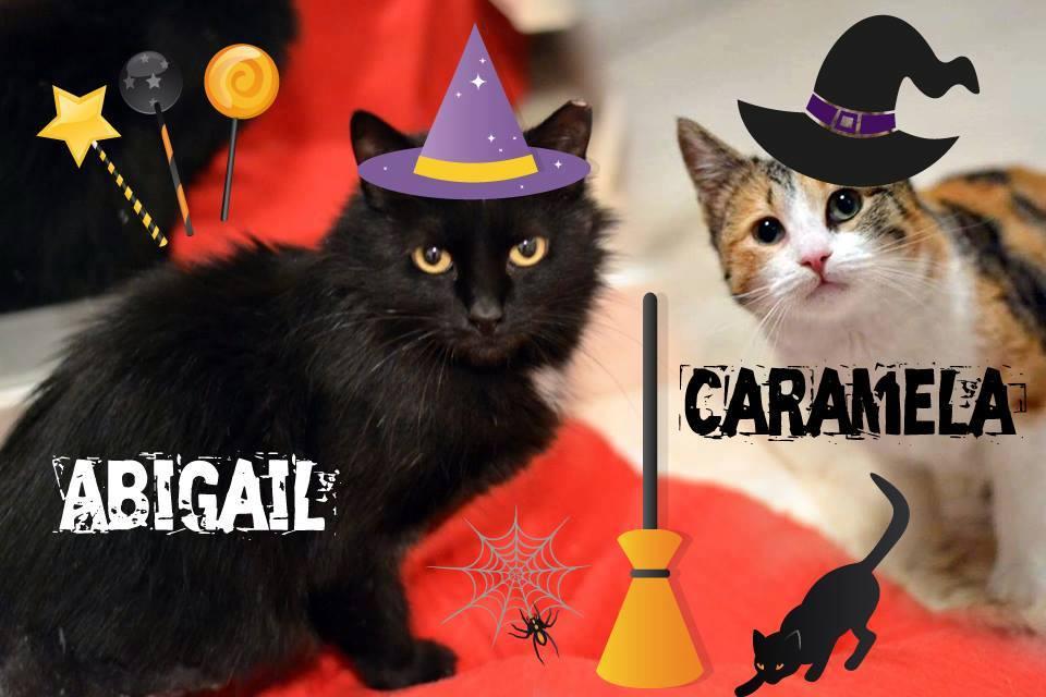 Abigail und Caramel